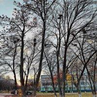 Вечереет. :: Михаил Николаев