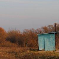 Голубое Осени к лицу :: Елена Минина