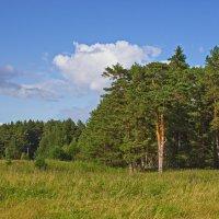 У леса на опушке :: val-isaew2010 Валерий Исаев