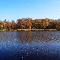 Осенний пейзаж. :: Антонина Гугаева
