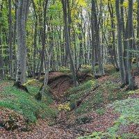 Осенний лес :: Vladimir Lisunov