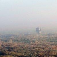 Утро туманное.. :: Антонина Гугаева