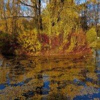 Прощание с Золотой осенью... :: Sergey Gordoff