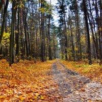 Здесь пахнет осенью... :: Miola
