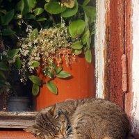 Спит кошка на окошке... :: Ольга И