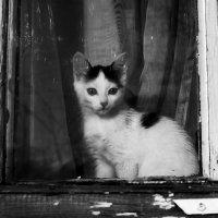 Кошка на окошке :: Виктор Печищев
