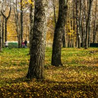Осеннее фото. :: Владимир Буравкин