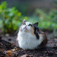 cat_44 :: Trage
