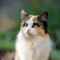 cat_43 :: Trage