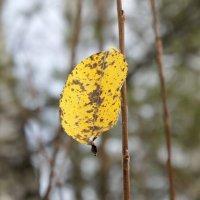 Одинокий осенний листок... :: Зинаида Каширина