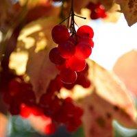 ... и ягоды как яхонты горят... :: Тамара Бедай