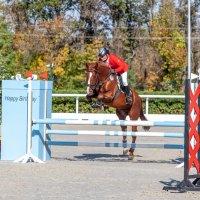 Кубок КСК Golden Horse 2019-10-13 :: Андрей Lyz