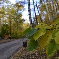 осень :: alpman виктор