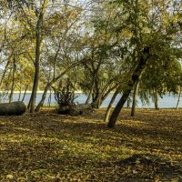 Золотая осень, тихая гавань. :: Yuri Chudnovetz