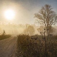 Осеннее утро :: Светлана Карнаух