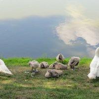 Наводим красоту после купания :: Вера Щукина