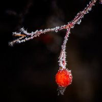 the frost :: alex graf