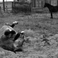 Когда конь валяется :: Сергей Шаврин