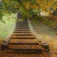 Осенний парк :: Владимир Самсонов
