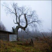 Осенний квадрат :: Kventin Natabos