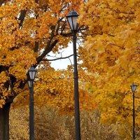 """""""В том парке осень золотая старинным золотом горит..."""" :: Ольга И"""