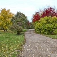 Окунёмся в красоту осени :: Nikolay Monahov
