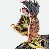 Ажурный профиль зайца :: Валерий Розенталь