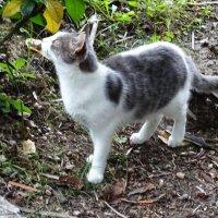 Кошка, наблюдавшая за полетом дрона :: Татьяна Р