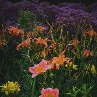 Таинственность цвета :: Evelina Tyutneva
