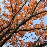 Звенит осенняя листва :: Валерий Хинаки