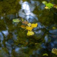 Листья опадают. Осень :: Геннадий Б