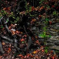А  древо   оголёнными корнями?... :: Евгений БРИГ и невич