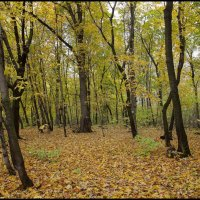 В осеннем лесу :: Алексей Патлах