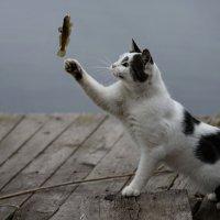 И не любить, рыбалку невозможно... :: Лиана Краснопольская .
