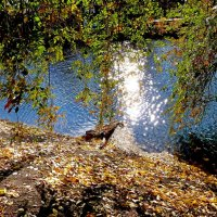 Солнечная дорожка из зайчиков на пруду :: Лидия Бараблина