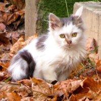 Котёнок :: Андрей Снегерёв