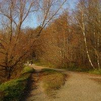 Что называется осенней прозрачностью леса :: Андрей Лукьянов