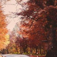 autumn road :: Nikola Ivanovski