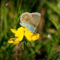 и снова бабочки...1 :: Александр Прокудин