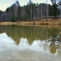 Осенний лес в тоскливой дрёме... :: Нэля Лысенко