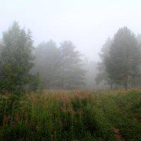 Туман :: Cергей Кочнев