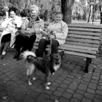 Давно не виделись :: dana smirnova