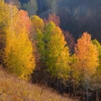 Золотая осень :: Юрий Губрий
