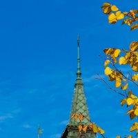 Осенние зарисовки :: Grey Bishop