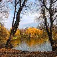 Москва, Ботанический сад. Последний теплый день осени. :: Александр Лебедевъ