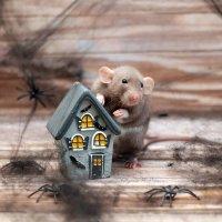 Хэллоуин в паутине для маленького крысёнка :: Татьяна Попова