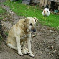 """В мыслях о """"Жизни собачьей"""" :: Артемий"""