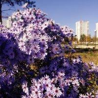 Последние цветы... :: Ирина
