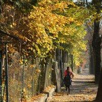 Дорога в осень :: john dow