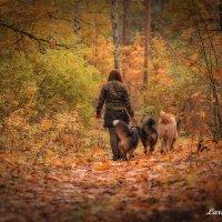 Осень в лесу :: Larisa Freimane
